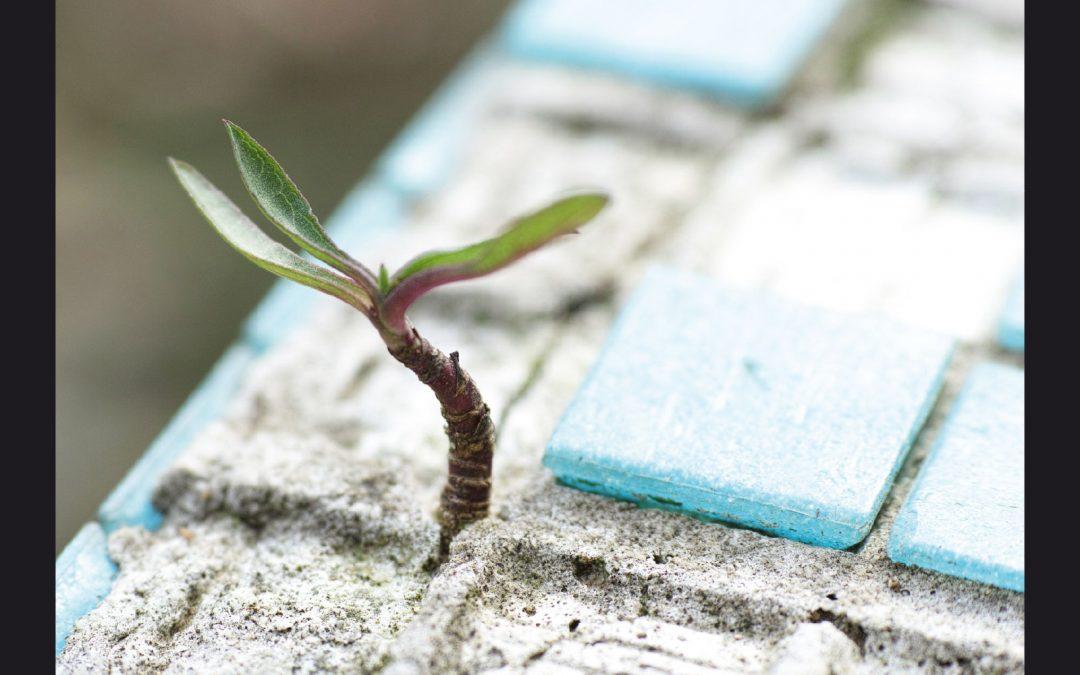 Beitrag: Hoffnung – Schritt über die Schwelle